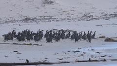 Birds taking off on Beach Stock Footage