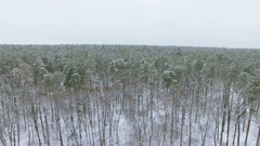 4K Aerial. Winter landscape. Fly  At low height over  winter trees Stock Footage