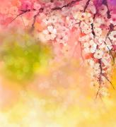 Watercolor Painting Cherry blossoms Stock Illustration