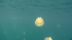 The jellyfish lake of Palau archipelago. Stock Footage