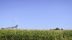 Sprinkler Watering Farm Crops on Sunny Day with Blue Sky Background Stock Footage