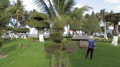 Topiary trees in the garden Stock Footage