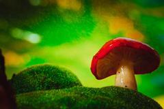 Fresh mushroom russula white stalk grows on moss Stock Photos