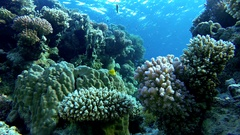 Coral reef, tropical fish. Warm ocean and clear water. Underwater world Stock Footage