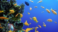 Life in the ocean. Tropical fish and coral reefs. Beautiful corals. Stock Footage