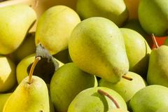 Ripe yellow and green pears in bright sunlight Stock Photos