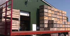 Forklift truck stacking fruit crates on a truck Stock Footage