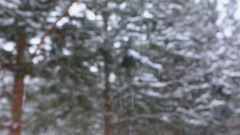 Large flakes of snow are falling on the background of a dark forest Stock Footage