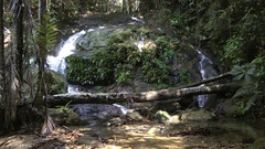 Gesneriad, Perak, Malaysia Stock Footage