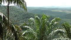 Oil palm plantations, Malaysia Stock Footage