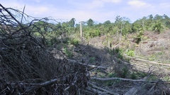Forest clearance, Malaysia Stock Footage