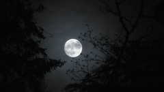 Between Two Trees Full Moon Rise At Night Stock Footage