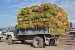 Truck with a load of hay in bales Stock Photos