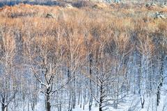 Tree tops illuminated by sunlight in winter Stock Photos