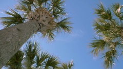 Looking Up to Clear Blue Sky Against Palm Trees, 4K Stock Footage