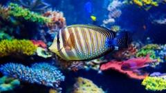 Colorful aquarium Stock Footage