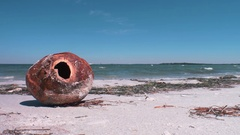 Weathered Coconut Husk on Beach, 4K Stock Footage