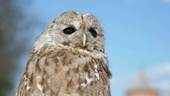 Tamed owl in the city. Close-up Stock Footage