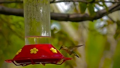 Hummingbird at feeder-extreme slow motion Stock Footage