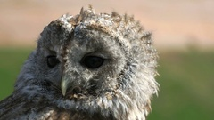 Attractive tamed owl in the city in the park Stock Footage