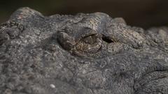 Crocodile eyes and jaws Stock Footage