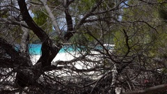 Whitehaven Beach, Tropical Landscape, Plants and Tree Stock Footage
