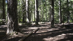 Pan from trail to Pacific Crest sign, and to trail again Stock Footage
