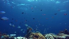 Vibrant reef teeming with life - a lot of colorful fish at an islands coral reef Stock Footage