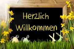 Sunny Narcissus, Easter Egg, Bunny, Herzlich Willkommen Means Welcome Stock Photos