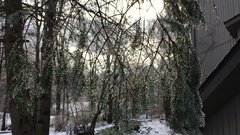 Icey pine branches in backyard of house Arkistovideo