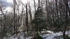 Pine Trees in wintry backyard Arkistovideo