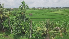 Canggu Rice Fields Panorama Indonesia Aerial 4k Stock Footage