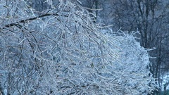 Trees after ice rain. Stock Footage
