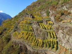 Vineyards and terracing - Aerial view Stock Footage