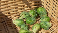 Fruits brussels sprouts falling to cart Stock Footage