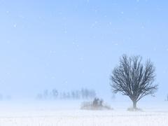 4K UltraHD Solitary tree in a winter landscape Stock Footage