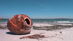 Coconut Husk on Beach, 4K Stock Footage