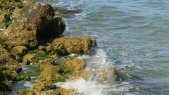 Water Crashing into Algae-Covered Rocks on Shore, 4K Stock Footage