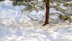Titmice on snow under a tree Stock Footage