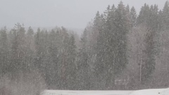 Snowfall in mixed forest Stock Footage