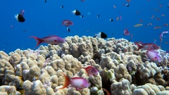 Underwater coral reef with tropical fish in ocean Stock Footage