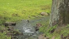 Small stream in a green park of Peterhof, Saint Petersburg Stock Footage
