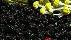 Blackberries and yellow flowers of Hypericum plant Stock Footage