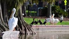 Pelican Resting on Brick Wall Near Lake Stock Footage