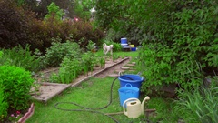 Funny dog running grass on garden backyard. White poodle playing outside Stock Footage