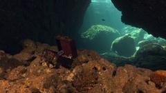 Scuba diver swimming into cave towards treasure chest Stock Footage