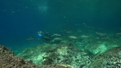 Scuba diver swimming over rocky reef Stock Footage
