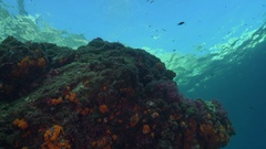 Scuba diver swimming over rocky coral reef Stock Footage