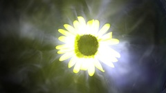 White smoke with black rotation flower core like abstract black sun Stock Footage