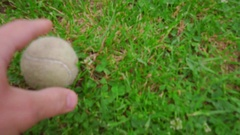 Pov of owner throwing tennis ball to white poodle dog. White dog playing Stock Footage
